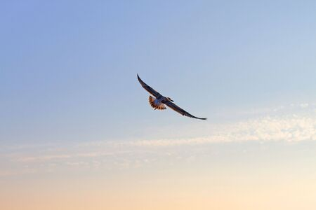 Young beautiful seagull against the blue sky on sunset.