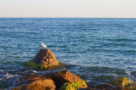 Stones in the water with gull Stock Photo
