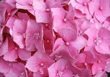 florish: A florish background. Stock Photo