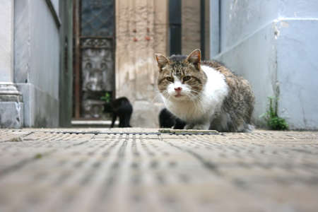 buenos: A cat sitting in the Cemetery of Recoleta, Buenos Aires. Stock Photo