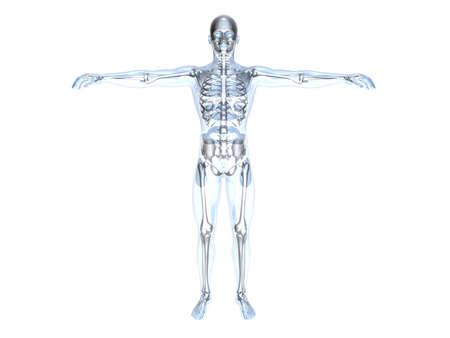 back of leg: 3D rendered Illustration.