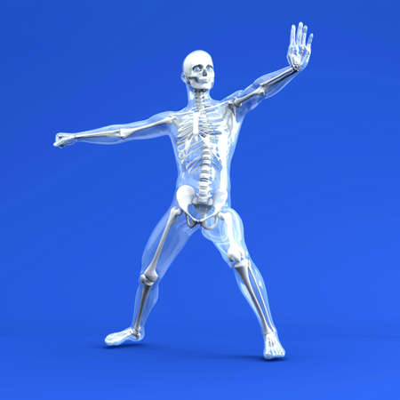 transparent male anatomy: 3D rendered Illustration.