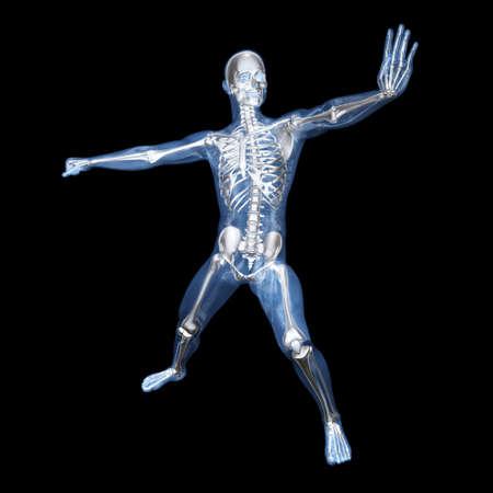 A medical visualisation of human anatomy. 3D rendered Illustration. Stock Illustration - 9076986