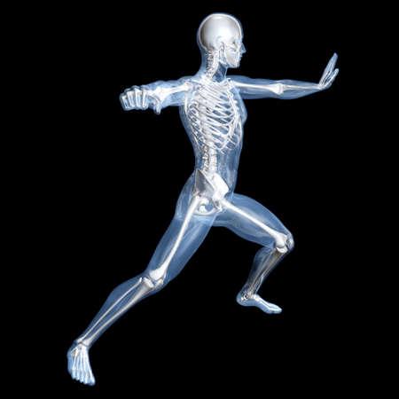 fisiologia: Una visualizaci�n m�dica de la anatom�a humana. 3D representa la ilustraci�n. Foto de archivo
