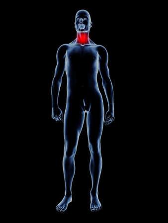 Medical Illustration. 3D rendered Illustration. Isolated on black. Stock Illustration - 9149676