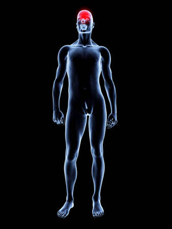 Medical Illustration. 3D rendered Illustration. Isolated on black. illustration