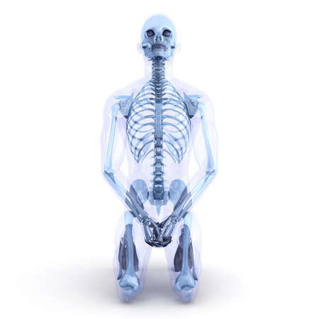 skeleton x ray: A male, human, translucent Body. Anatomy visualization. 3D rendered Illustration. Isolated on white.