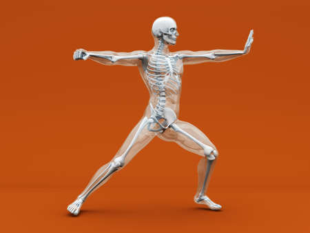 chirurgic: A medical visualisation of human anatomy. 3D rendered Illustration.