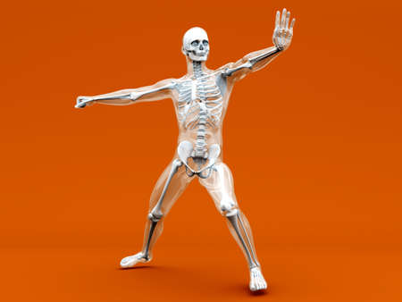 visualisation: A medical visualisation of human anatomy. 3D rendered Illustration.