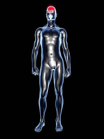 male torso: Medical Illustration. 3D rendered Illustration. Isolated on black. Stock Photo