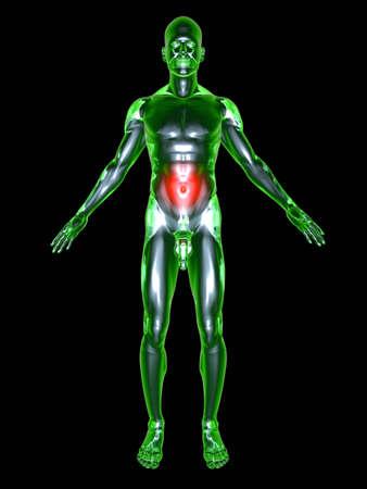 Medical Illustration. 3D rendered Illustration. Isolated on black. Stock Illustration - 9956098