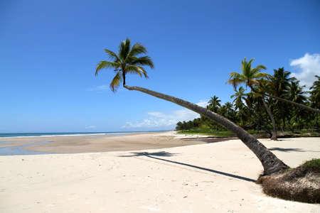 At the beach of Bahia, Brazil, South america.