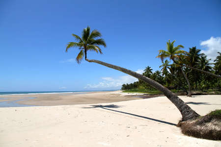 At the beach of Bahia, Brazil, South america. photo