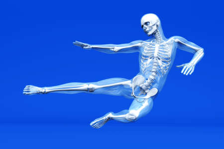 A medical visualisation of human anatomy. 3D rendered Illustration. illustration
