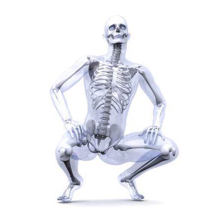 esqueleto humano: Una visualizaci�n m�dica de la anatom�a humana. 3d rindi� la ilustraci�n. Aislado en blanco. Foto de archivo