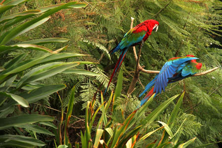 A Parrot in the tropical Forest. photo