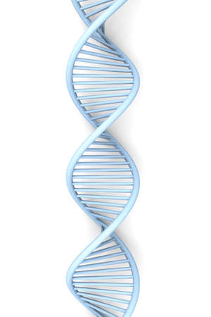 dna strand: A symbolic DNA model  3D rendered illustration  Isolated on white  Stock Photo