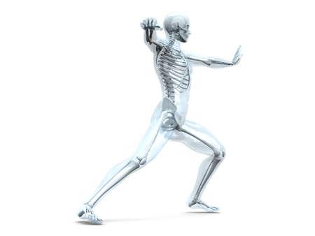 scheletro umano: Una visualizzazione medico di anatomia umana illustrazione 3D rendering isolato su bianco