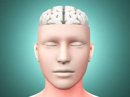 A human Brain  Anatomical visualization  3D rendered illustration  illustration