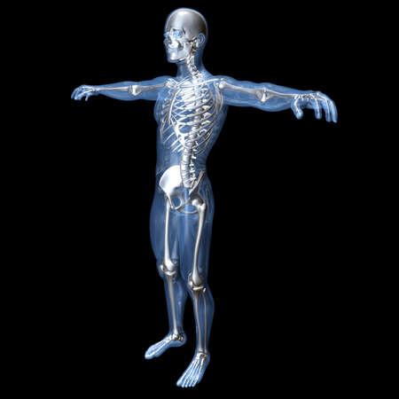 Una Visualización Médica De La Anatomía Humana 3d Rindió La ...
