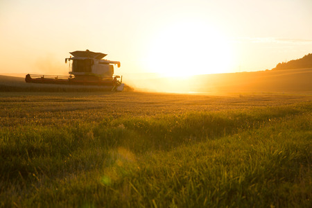 A field getting harvested by a agricultural machine. Standard-Bild