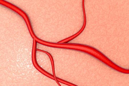 vasos sanguineos: Un vaso sanguíneo en el tejido orgánico. 3d ilustración.