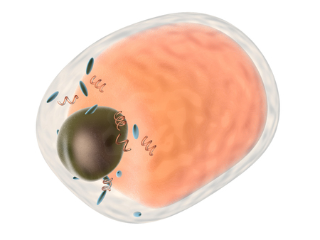 A detailed fat cell. 3d rendered Illustration. Isolated on white.