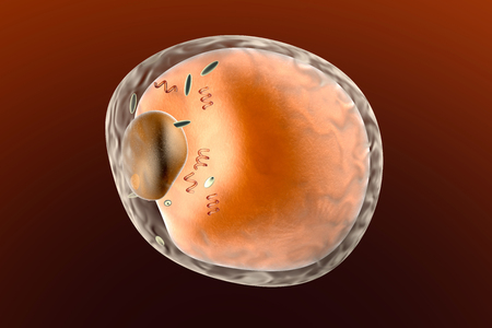 A detailed fat cell. 3d rendered Illustration.   illustration