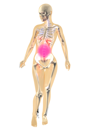 Female anatomy. Stomach ache and pain sensation. 3D illustration. Isolated on white. Stock Photo