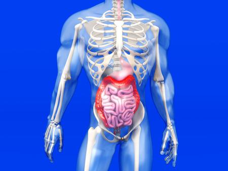 Visualización En 3D De La Anatomía Humana. Fotos, Retratos, Imágenes ...