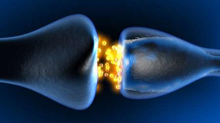 Neurotransmission dans le Synapse. 3D a rendu l'animation. Banque d'images - 66327922