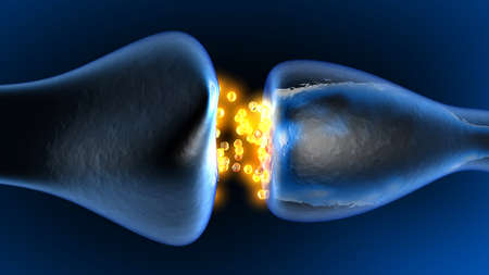 Neurotransmission in the Synapse. 3D rendered animation.