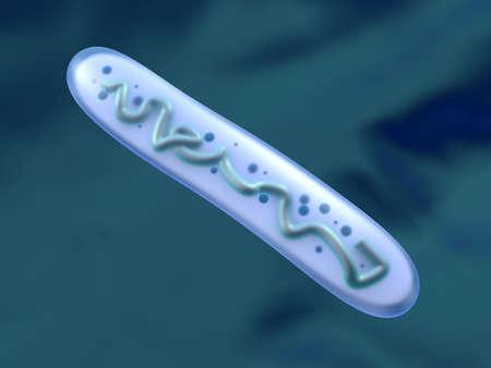 3D Illustration of a anatomically correct Lactobacillus Bacteria.