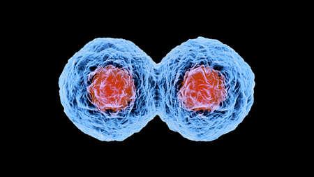 3 D レンダリングされた細胞複製のイラスト