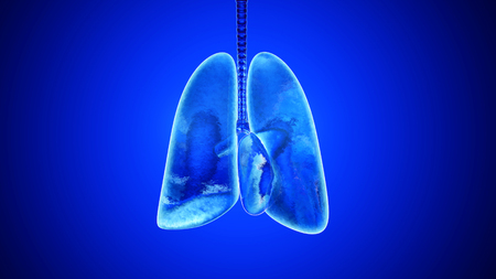 3D illustration of human lungs filled with Oxygen.