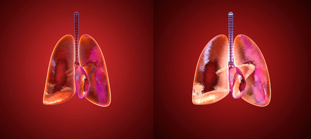 3D illustration of the respiratory process of human lungs inhaling Oxygen.