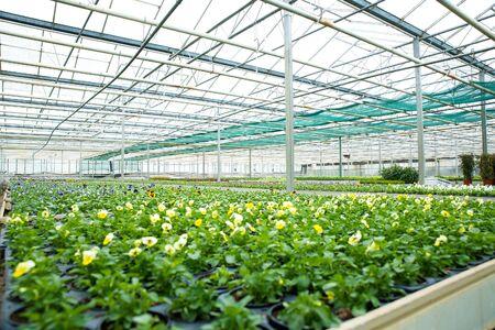 Blumen und Pflanzen in einem Gewächshaus Standard-Bild