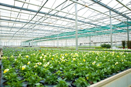 Flowers and plants in a greenhouse Banco de Imagens
