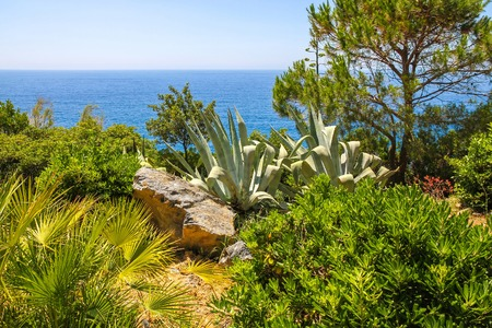 View of the tropical plants with the blue Mediterranean Sea in the a background on a bright sunny day. Reklamní fotografie