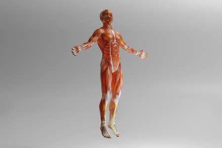 3D Illustration of human anatomy illustration.