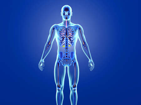 3D Illustration of the human anatomy - x-ray view at the with skeleton.