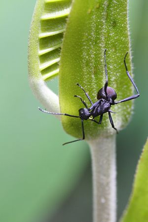 An ant on the leaf of a plant in a tropical forest photo
