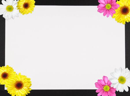 yellow daisy: Daisies decorating the four corners forming a border on a piece of paper with copy space Stock Photo