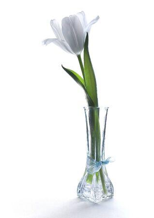 One white tulip in a vase