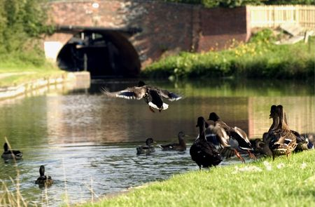 English village duck pond with ducks flying over it photo