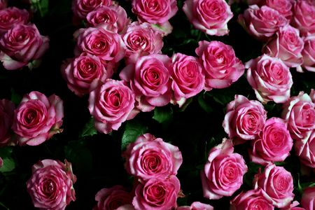 bl: Some pink roses seen here in a beautiful bouquet Stock Photo