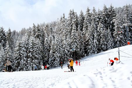 Scenic view of skiers of wintry slope with alpine forest in background, Swiss Alps. Stock Photo - 5979057