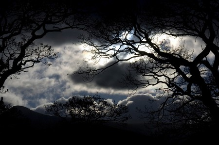 eerie: Scenic view of silhouetted trees in wood and night with moonlight and stormy skies. Stock Photo