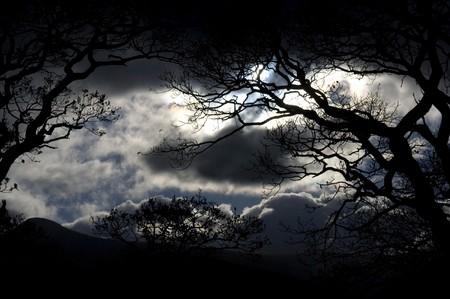 luz de luna: Vista esc�nica de silhouetted �rboles de madera y de la noche con la luz de la Luna y el cielo tormentoso.