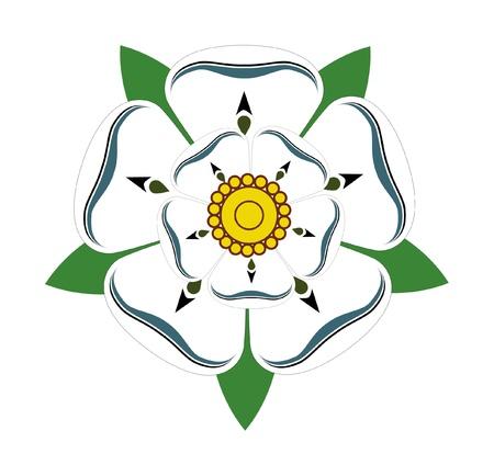 english rose: White Rose of Yorkshire isolated on plain background.